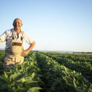 Farmerpools, image ICO (FR)